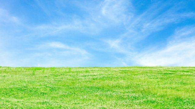 イデコンポ☆芝生のメンテナンス☆芝生のサッチ対策はどうしていますか?